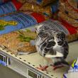 Carrefour Monte Carlo samoobsługowy dział z karmą dla zwierząt