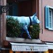 Alpejska krowa zwinna niczym kozica