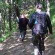 Powrót piechotą, mimo doniesień o żyjących w tych lasach uprzejmych łosiach