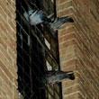 Gołębie wolały pozostać incognito