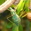 Konkretny owad