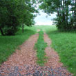 Droga w pole